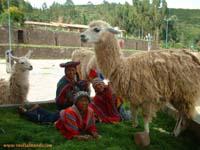 llamas en cuzco