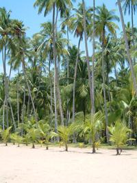 Playa Medina - Via Rio Caribe -